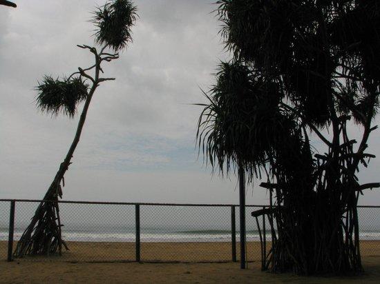 Hotel Hibiscus Beach: beach