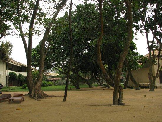 Hotel Hibiscus Beach: garden