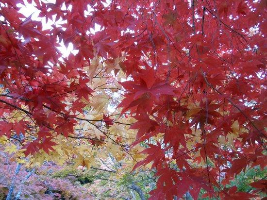 Shojiji Temple : Photo1