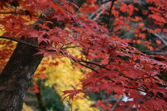 Shojiji Temple : Photo2