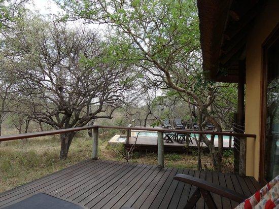 Toro Yaka Bush Lodge: Blick vom Elephant Room auf Pool-Bereich