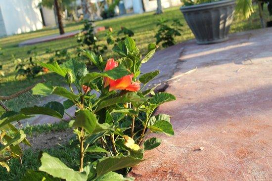 Hotel Maya Inn: Garden