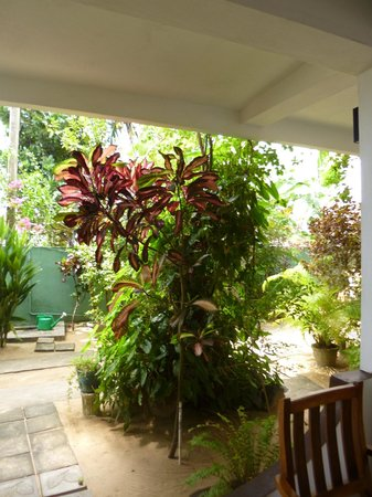 Unawatuna Beach Bungalow Hotel: The hotel is decorated with lots of plants which make it looks lively