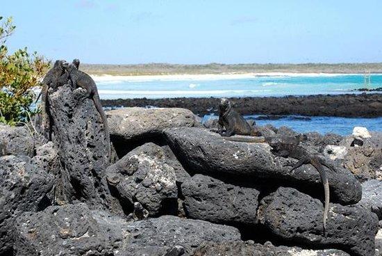 Galapagos Alternative: Marine Iguana Hangout - Puerto Ayora