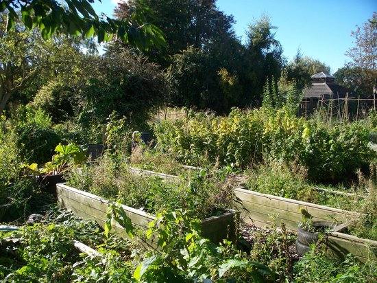 Windmill Hill City Farm: Garden/allotment
