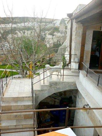 Traveller's Cave Hotel: А это тот самый песик Кырлы