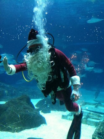 Adventure Aquarium: Scuba Santa!