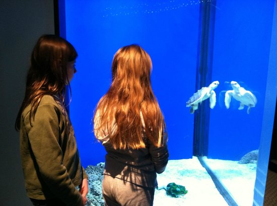 Adventure Aquarium: Ozzy the loggerhead turtle