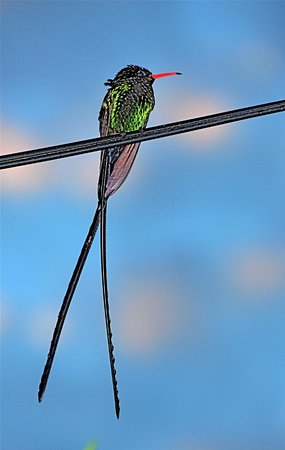 Secrets Cabins on Negril Beach: We have hummingbirds