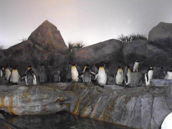 St. Louis Zoo: it felt so good in here