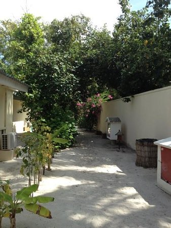 Eriyadu Island Resort: footpath at rear of 151