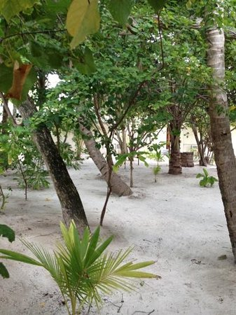 Eriyadu Island Resort: middle of island