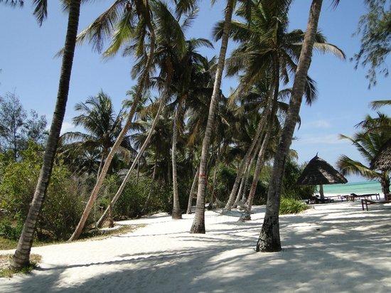 Pongwe Beach Hotel: Plage de rêve