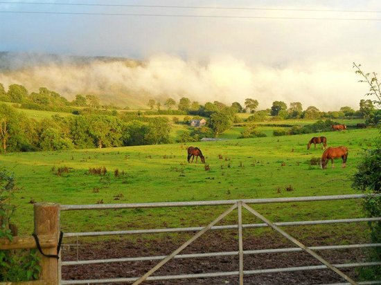 Tregoyd Mountain Riders: grazing ponies, a little like an oil painting
