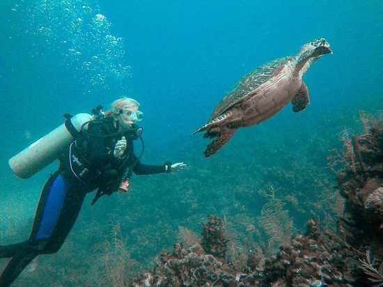 Barefoot Cay Resort: SCUBA