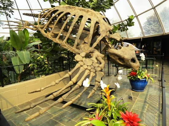 Reptile Gardens : Fossil of Giant Sea Turtle