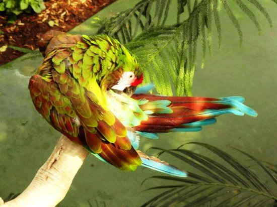 Reptile Gardens : Macaw