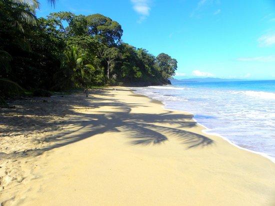 Beach near Casa Moabi