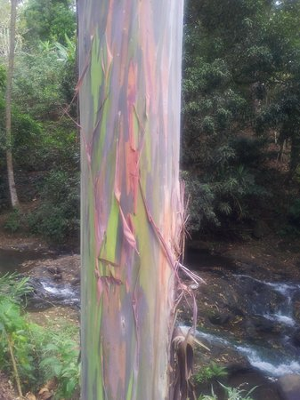Hotel Villas Escondidas: Unusual tree bark