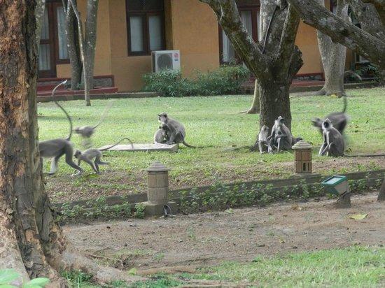 Hotel Sigiriya: le jardin
