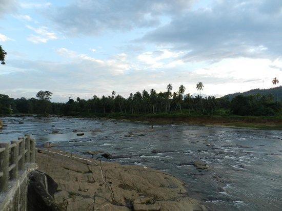 Hotel Elephant Bay: vue de la riviere
