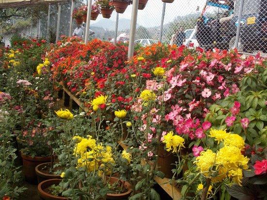 CloudsLand: A flower show