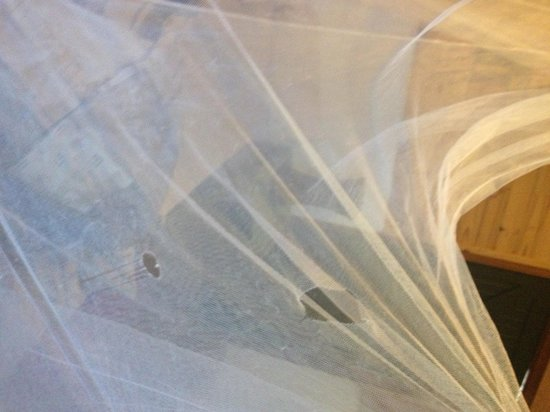 Peace of Eden : torn mosquito net