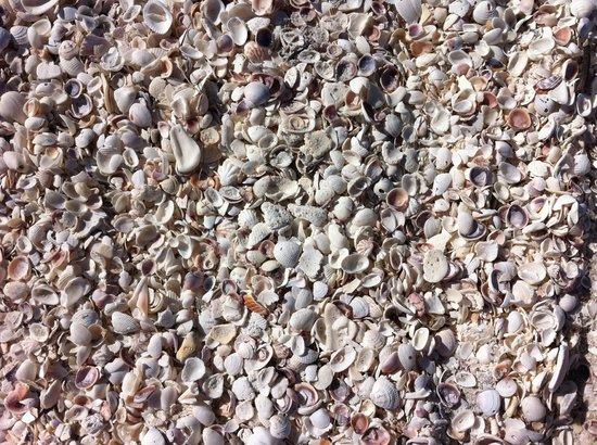 آيلاند إن: Snäckor i oändlighet på stranden 