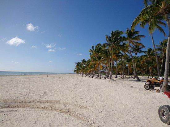 Grand Bahia Principe Punta Cana: Praia Sul - Mar Caribe