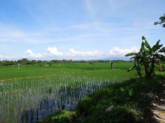 Bali Wilderness Dirt Bike - Day Tours: Paddy view