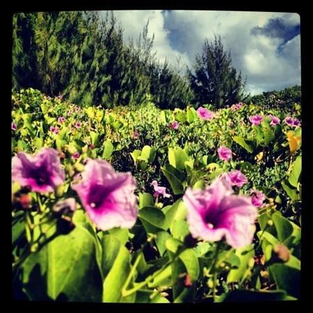 Cocos Island Resort: lush vegitation of Cocos Island, off the southern coast of Guam