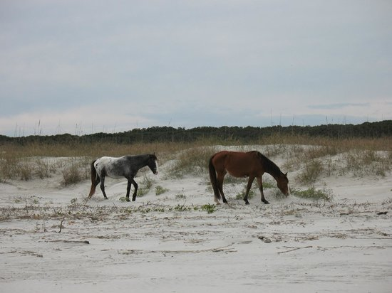 ‪سبينسر هاوس إن بيد آند بريكفاست: Cumberland Island horses on the beach