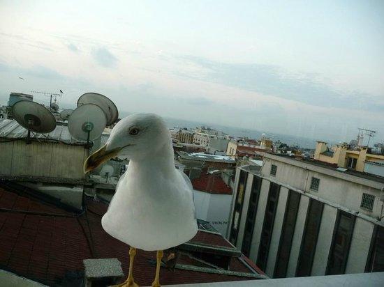 Oran Hotel: Mouette accompagnant votre petit déjeuner