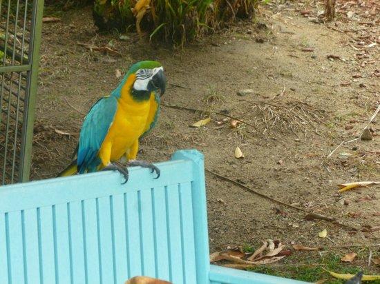 Hilton Aruba Caribbean Resort & Casino: Another resident