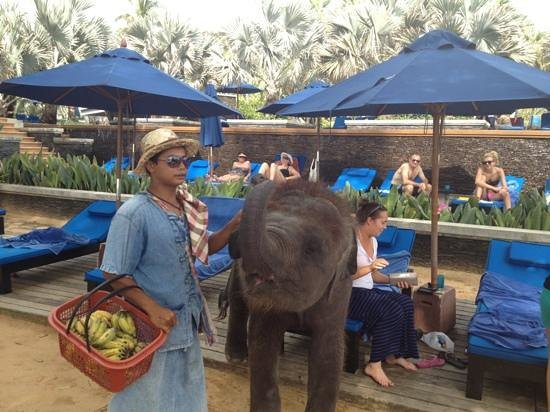 JW Marriott Phuket Resort & Spa: baby elephant!
