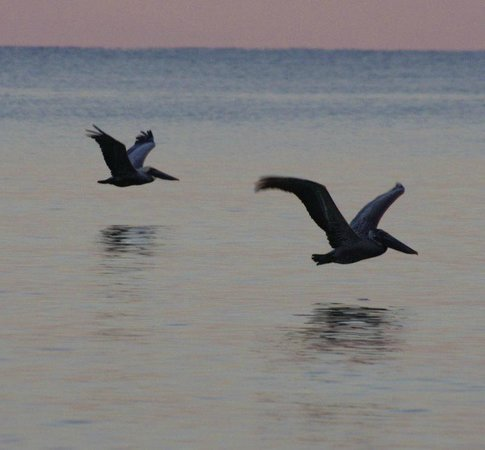 SeaCrest Condos: Lots of wildlife
