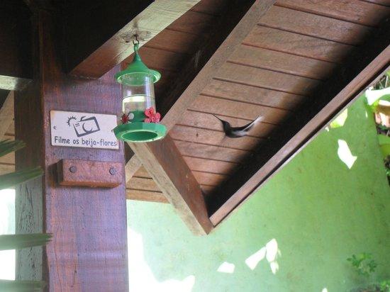 Hotel Coquille - Ubatuba: Beija-flor bem pertinho do restaurante