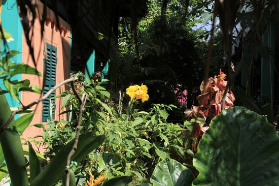 Geckozy Guesthouse: Real Flowers garden