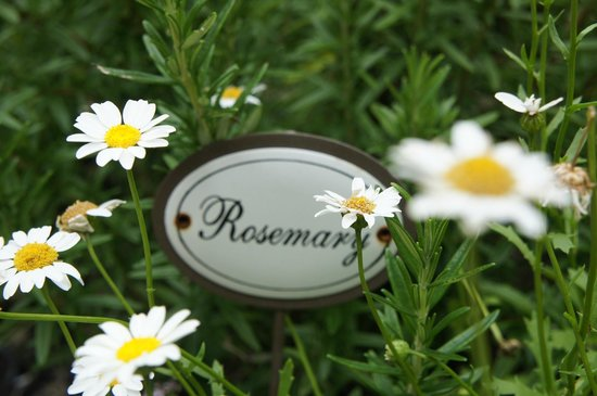 Admiral Collingwood Lodge: rosemary
