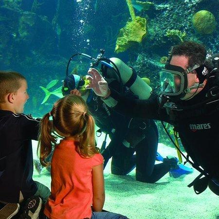 Newport Aquarium: Dive show
