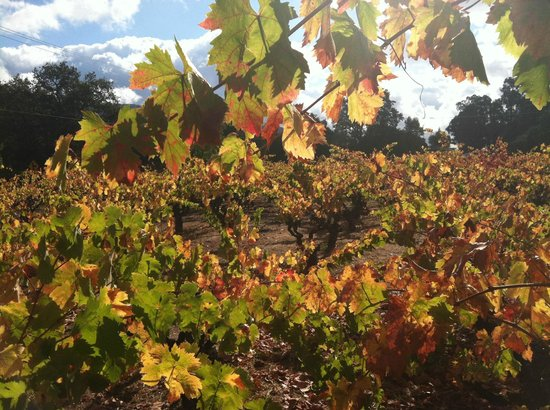 Jewels Wine Drivers - Tours : Autumn in Sonoma Valley