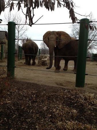 two different types of elephants picture of louisville zoo