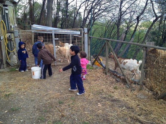 Podere Casanova: Kids feeding the goats