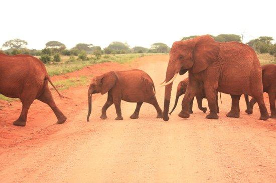Safari Kenya Watamu - Day Tours: Passeggiata di Elefanti