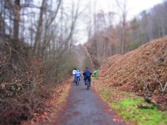 Virginia Creeper Trail: no wildlife or human life in sight