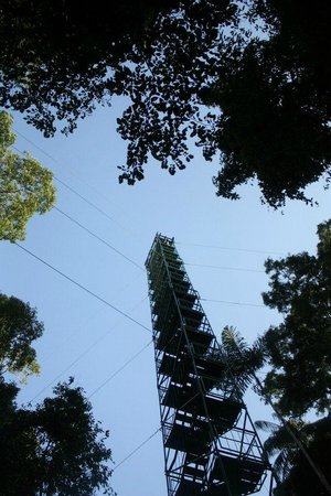 Posada Amazonas: The canopy tower