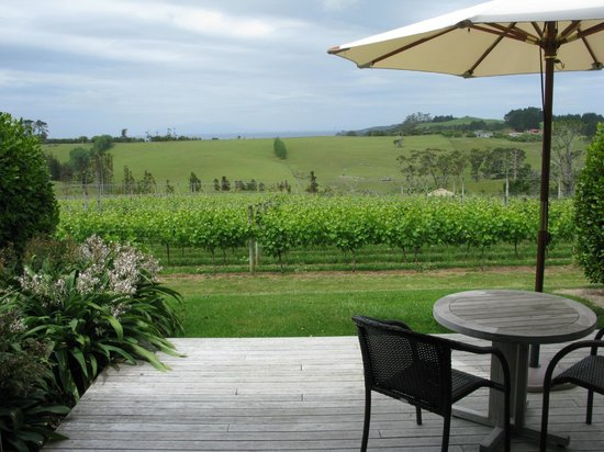 Takatu Lodge & Vineyard: view over vineyards