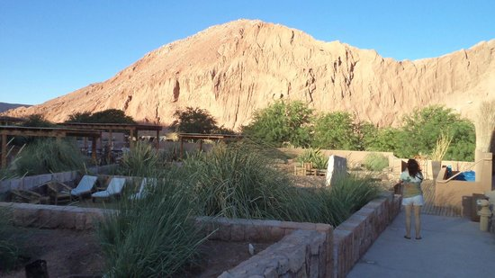 Alto Atacama Desert Lodge & Spa: Una vista del jardín