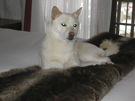 Sky Hotel - a Kimpton Hotel: My dog lying on the faux fur blanket so plush