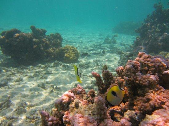 Amuri Sands, Aitutaki: Amuri Sands snorkelling